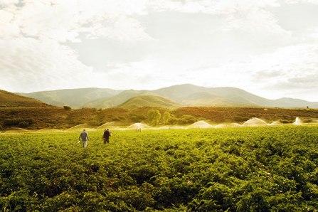 Woody Creek Field-of-Dreams
